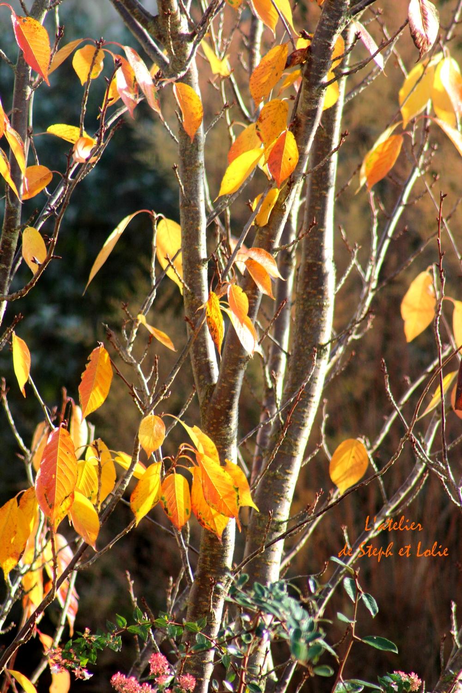 automne arbre1