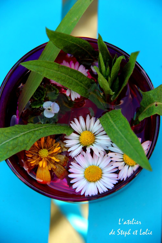 fleur lolie paquerette